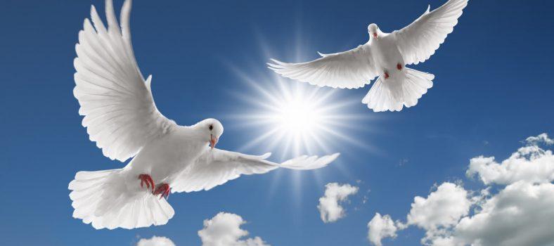 بدی کا جواب بدی سے نہ دیجئے - یسوع ال مسیح مسلمانوں کے لئے