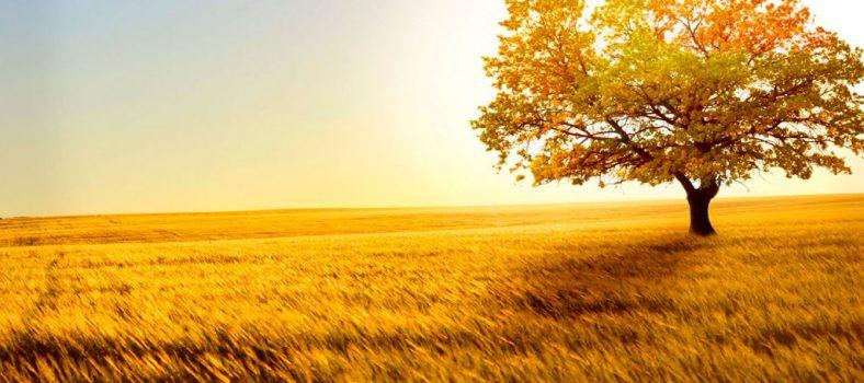 نیکی کرنے کی ہدایت - سچائی کا راستہ - زارا قندیل - اردو انجیل کا علم - مسیحی ایمان
