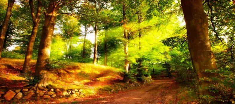 La oración del domingo por la mañana | Palabra de Dios para los Musulmanes