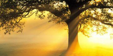 Kebebasan & Hukum (Oleh: Mary Buchanan) - Ajaran Alkitab Online
