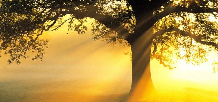 Kebebasan & Hukum (Oleh Mary Buchanan) - Berbagi Pengajaran Alkitab