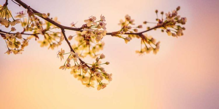 زبور 11 - خداوند پر اعتماد - خداوند پر توکل رکھنا - خداوند کا عظیم تخت