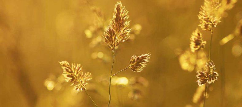 زبور 8 - خدا کی تمجید اور انسان کا وقار - خداوند سب پر قادر ہے - خداوند بزرگ اور عظیم ہے