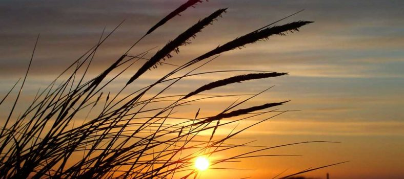 زبور 21 - فتح یابی کے لئے شکرگزاری - خداوند کی دل سے شکرگزاری کرنا - خداوند کی عظیم قوت