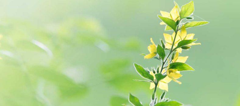 زبور 22 - جان کنی میں پکار اور ستائش کا گیت - مُصیبت میں خداوند کو پُکار