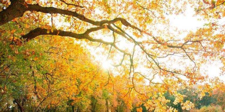 زبور 24 - عظیم بادشاہ - زمین کی معمُوری خُداوند کی ہے - زمین کے باشندے