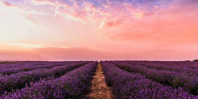 زبور 26 - راست آدمی کی دُعا - خداوند کا انصاف - خداوند پر بے لغزش تُوکل