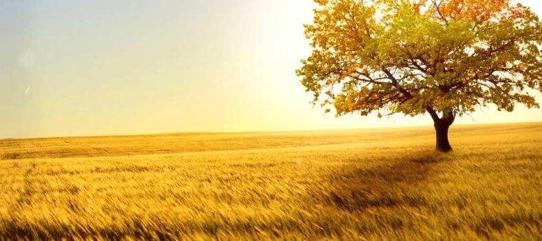 یسوع کے زمین پر آنے کا مقصد - ناپاک گُناہ کی سرزمین - یسوع کی نجات