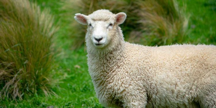 The lost sheep - Luke 15 1-7 - Parables of Jesus - Rejoicing in heaven